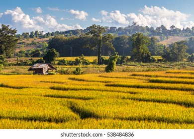 Green terraced rice fields and farmer hut during harvest period in Pai. Mae Hong Son province, northern Thailand