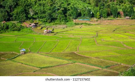 Green Terraces rice field, a beautiful natural beauty on mountain in Nan,Khun Nan  Rice Terraces, Boklua  Nan Province, Thailand