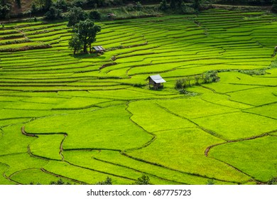 Green Terraces rice field, a beautiful natural beauty on mountain in Nan Khun Nan  Rice Terraces,Boklua Nan Province, Thailand