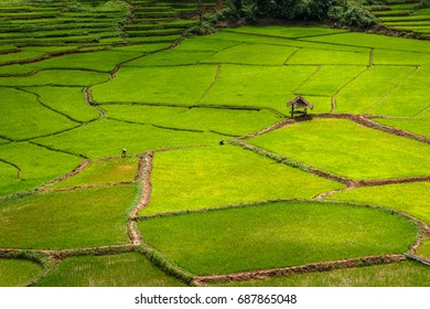 Green Terraces rice field, a beautiful natural beauty on mountain in Nan Khun Nan  Rice Terraces, Boklua  Nan Province, Thailand