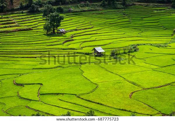 Green Terraces rice field, a beautiful natural beauty on mountain in Nan Khun Nan  Rice Terraces,Boklua Nan Province, Thailand