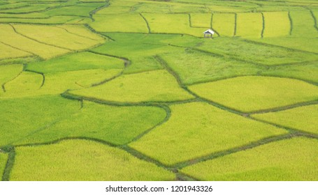 Green Terraces rice field in Thailand, a beautiful natural beauty on mountain in Nan Khun Nan Rice Terraces, Boklua Nan Province, Thailand