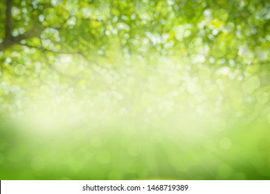 Green Tree Background Images Stock Photos Vectors Shutterstock