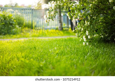Green tidy park grass lawn under shady trees summer background with copy-space