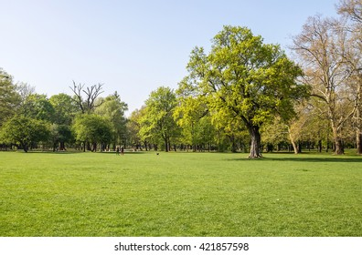 Green tidy park grass lawn under shady trees - summer background with copy-space
