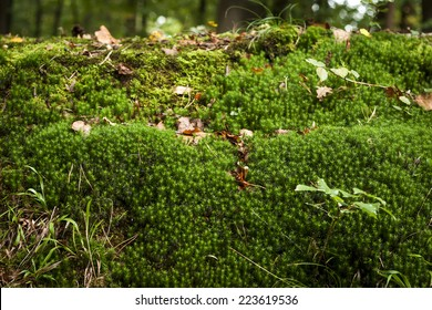 green tinny plants in an forest soil, nature background