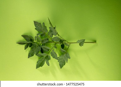 Green tomato branch on green top view