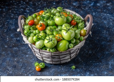Green tomatoes freshly picked to be used for pickles