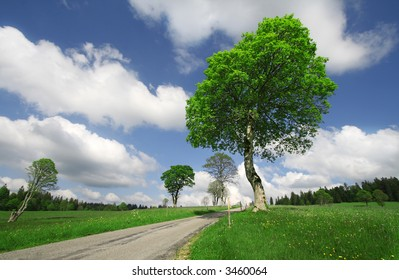 Green Tree against a Blue Sky on a Summer Sunny Day