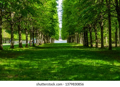 Green tree alley pathways with green lawn in France Versailles gardens in shadow with a lake in a distance ending in a lake