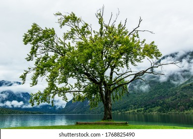 green tree at bohinj lake under Julian alps - Shutterstock ID 1768825490