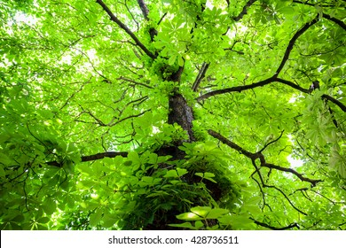 Green tree with branches and leaves