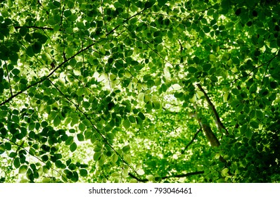 Green tree canopy with sunlight bleeding through