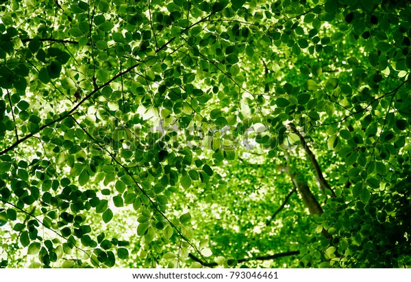 Green tree canopy with sunlight bleeding through