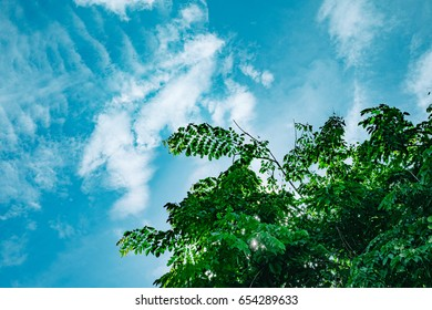 Green tree with clear blue sky