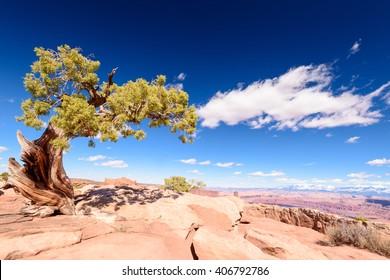 Green tree in the desert
