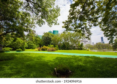 Green tree forest in city public park with green meadow grass nature landscape