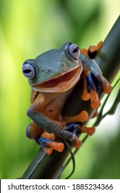 Green tree frog hanging on bamboo tree