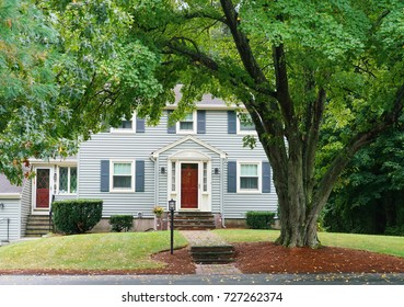 Green tree in front of the house in residential area