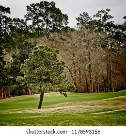 Green Tree in Golf Course in The Woodlands TX