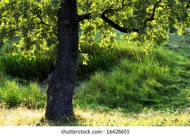 Green tree and grass