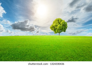 Green tree and grass field with white clouds