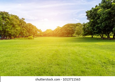 Green tree and green grass in public park with light blue sky and orange sunrise