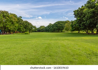 Green tree and green grass in public park with light blue sky and orange sunrise - Shutterstock ID 1610019610