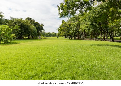 Green tree and green grass in public park with light blue sky