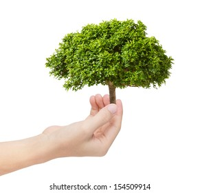 green tree in hand as environmental concept
