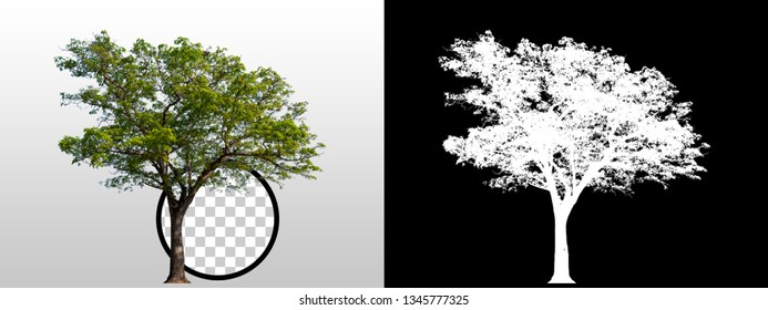 Green tree isolated on white background with high quality mask alpha channel and clipping path. Can used in architectural design or Decoration work. Suitable for natural articles fine print / web page