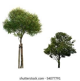 Green tree isolated on white background with included clipping path