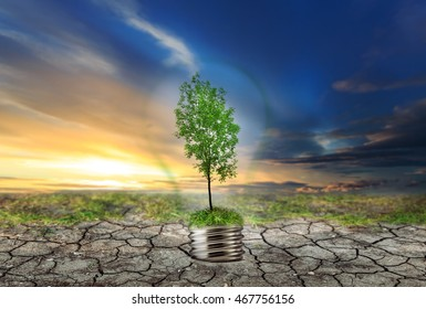 Green tree in lamp on dry soil with moss background