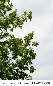 green tree leaves against the blue sky background