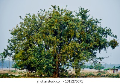 A green tree with leaves around an urban area