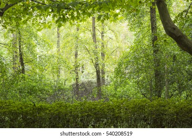 Green Tree Leaves and Branches Background