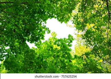 Green tree leaves lit by the bright sun