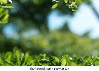 Green tree leaves on blurred background