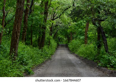 green tree lined dirt road
