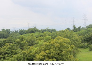 Green Tree, Little Forest in Indonesia