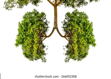 green tree lungs isolated on white
