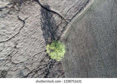 Green tree in a meadow. View from above. Aerial view
