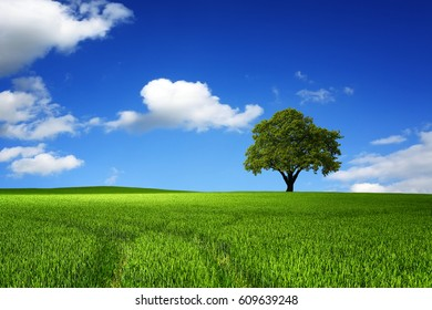 Green tree in nature landscape