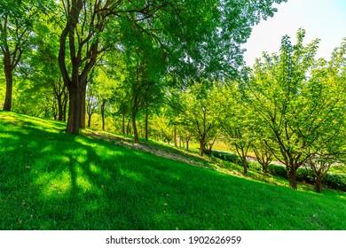 Green tree nature landscape in summer season.