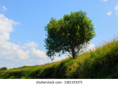 Green tree on the edge of a low cliff by the river, bright green nature, blue clear sky and green grass