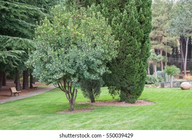 green tree on the lawn in an exotic park in high quality
