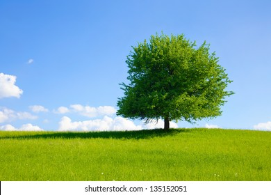 Green tree on a meadow with blue sky