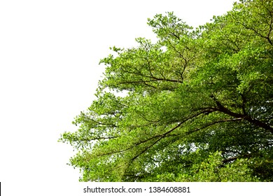 Green tree on white isolated background