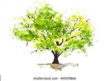 Green tree on white, watercolor illustrator