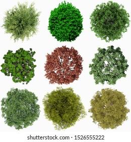 Green tree plan top viwe